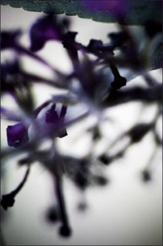 Végétal - 4225, 2008