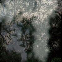 Végétaux I, 2007