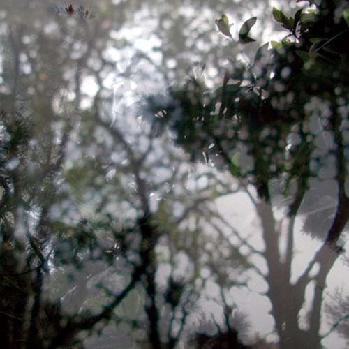 Végétaux III, 2007