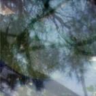 Végétaux IV, 2007