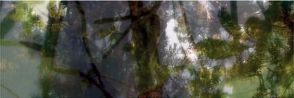 Végétaux V, 2007
