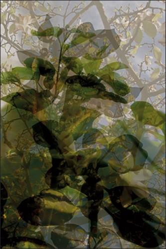 Végétaux 16, 2008