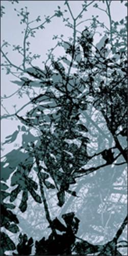 Végétaux 17, 2008