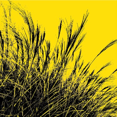 Grass (yellow), 2011