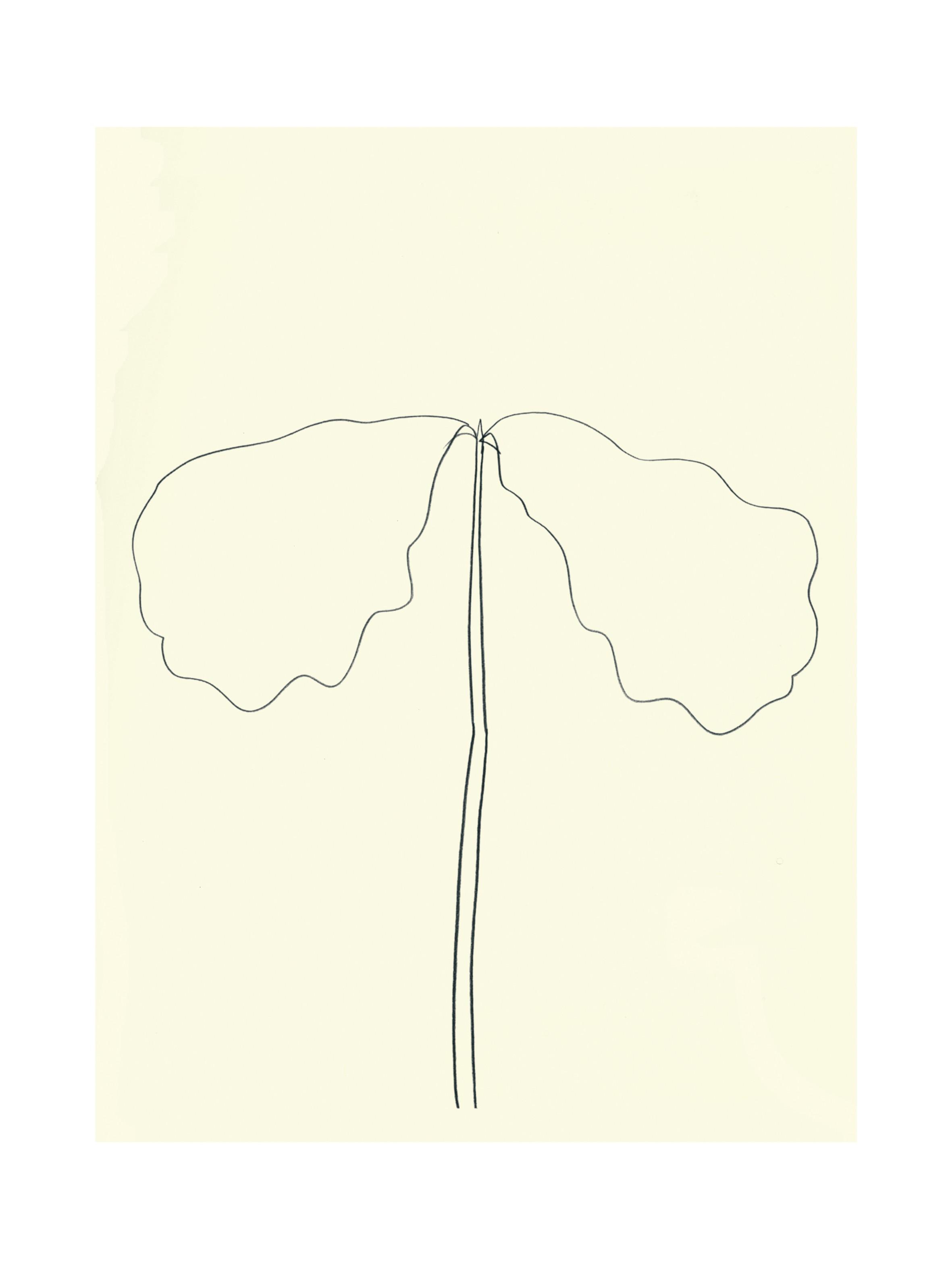 Chêne, 1964