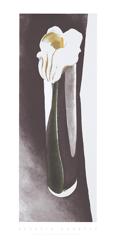 Calla Lily in tall glass, 1923