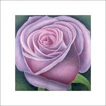 Big Rose, 2004