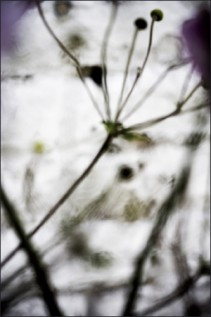 Végétal - 4174, 2008