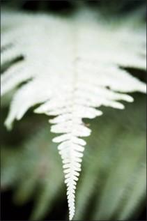 Végétal - 4196, 2008