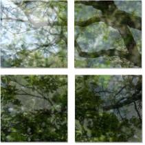 Végétaux VII, 2007 (set of 4)