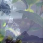 Végétaux VI, 2007