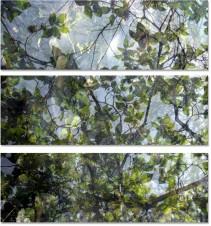Végétaux VIII, 2007 (set of 3)