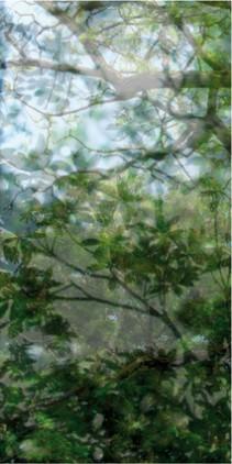Végéaux VII, 2007