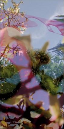 Végétaux 11, 2008