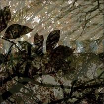 Végétaux 13, 2008