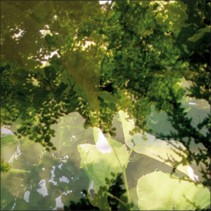 Végétaux 14, 2008