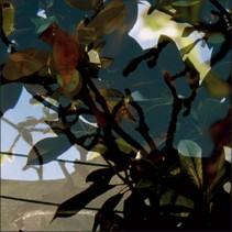 Végétaux 15, 2008