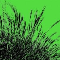 Grass (green), 2011