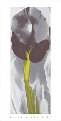 Dark Iris I, 1927