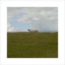 Prairie, 2007