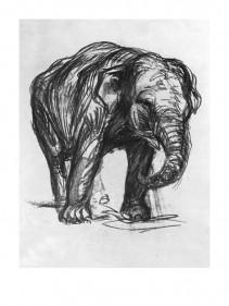 Elefant, 1907