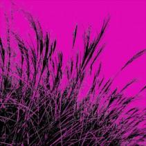 Grass (magenta), 2011