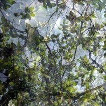 Végétaux VIII, 2007